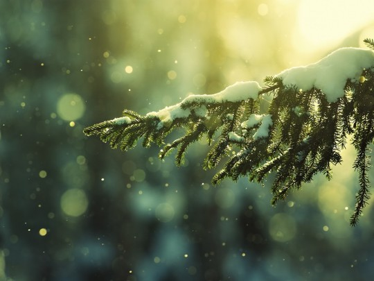 best christmas snow wallpapers