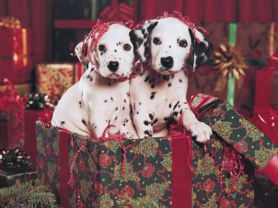 Christmas puppys wallpapers 2013